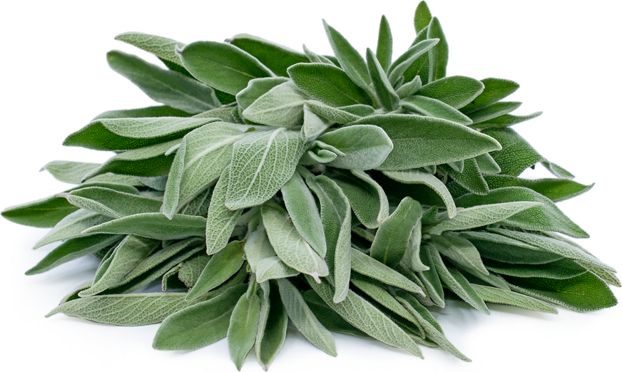 Sage Health Benefits, Nutritional Value and Uses