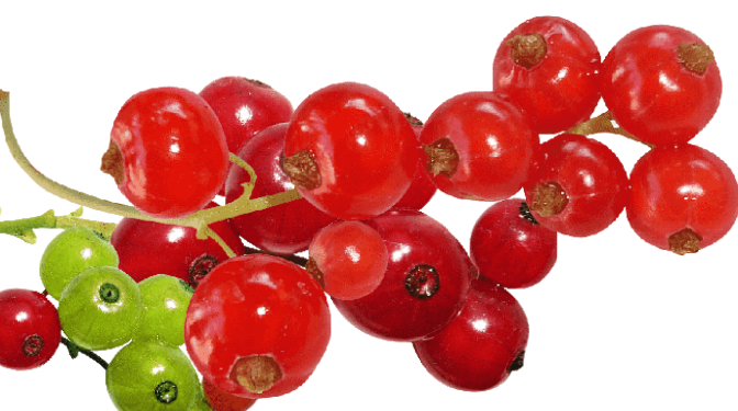 Redcurrant Health Benefits, Nutritional Value and Uses