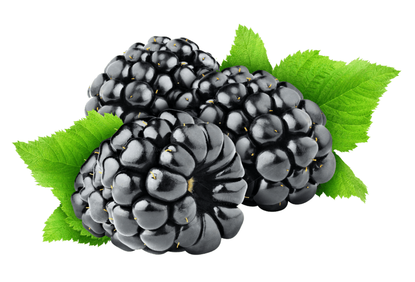 Blackberry Health Benefits, Nutritional Value and Uses
